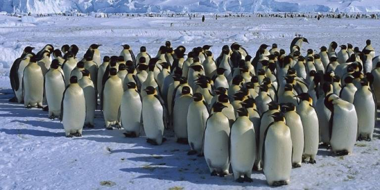 Group of penguins standing on the snow