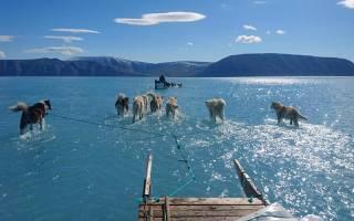 Husky sleighs in Greenland