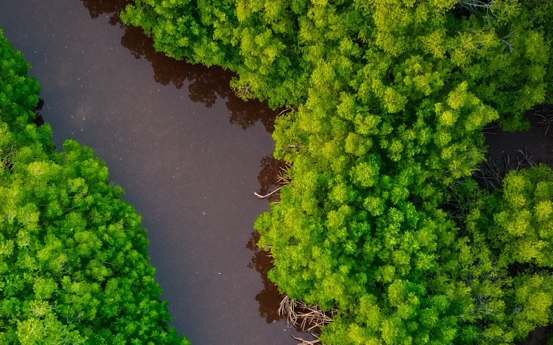 Mangroves from above
