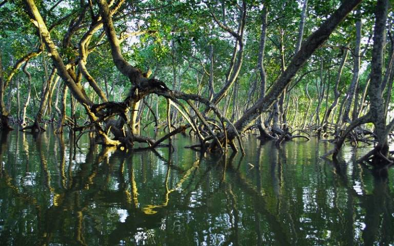 Mangrove forest in Kenya