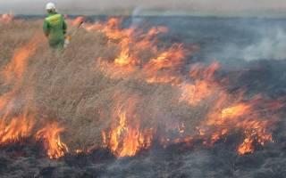 Forest fire in Australia
