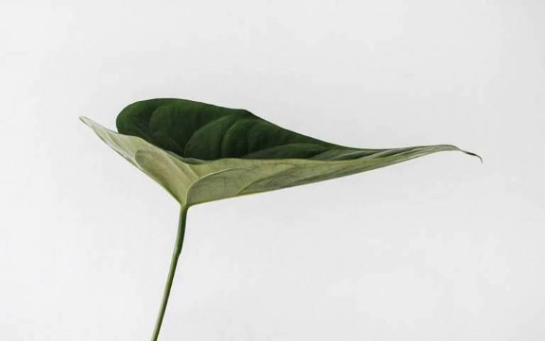 Green leaf against white background by Sarah Dorweiler on Unsplash