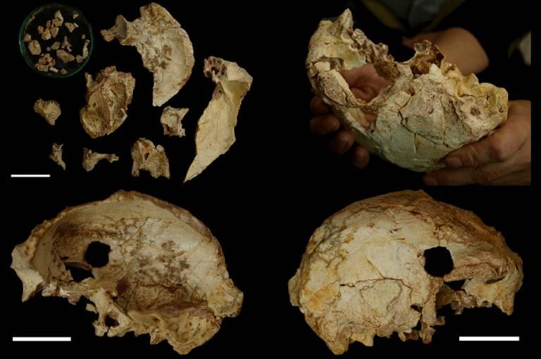 Aroeira 3 Skull