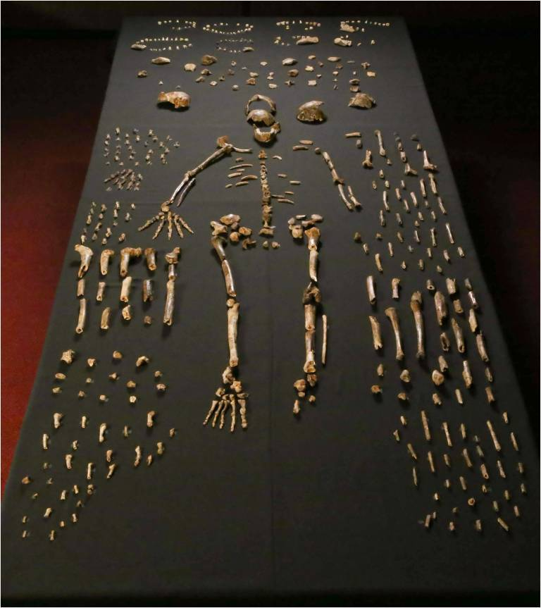 The Remains of Homo naledi