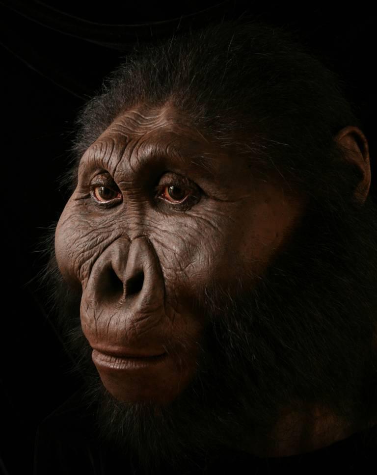 Paranthropus boisei (By John Gurche)