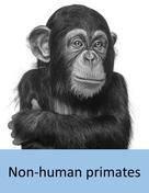 non-human_primate