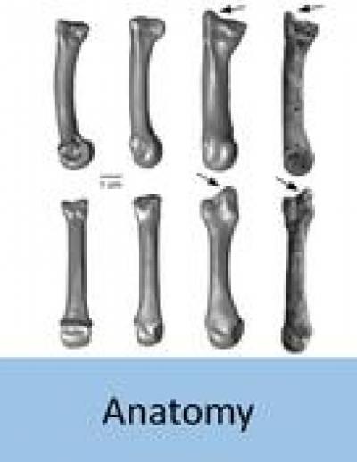 evolutionary_anatomy