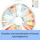 Evolution and recombination of human cytomegalovirus