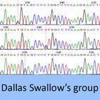 dallas swallows group