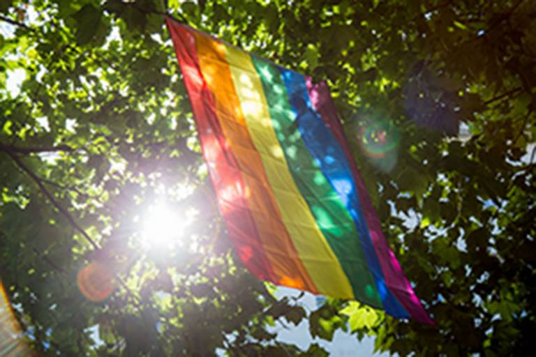 image of rainbow flag hanging from trees with the sunlight shining through