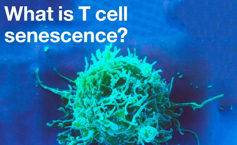 What is T cell senescence?