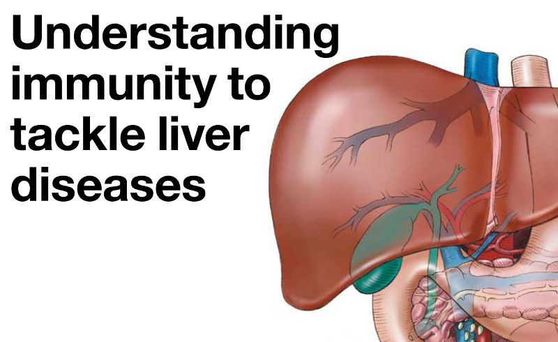 Understanding immunity to tackle liver diseases
