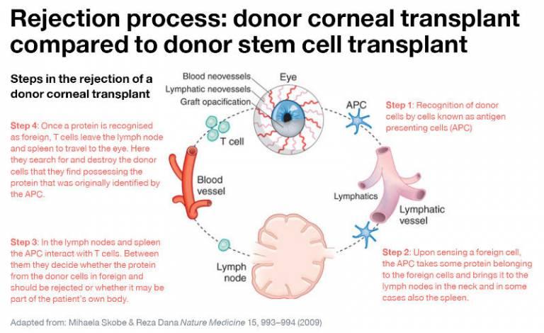 Bioengineered stem cell transplants for corneal regeneration