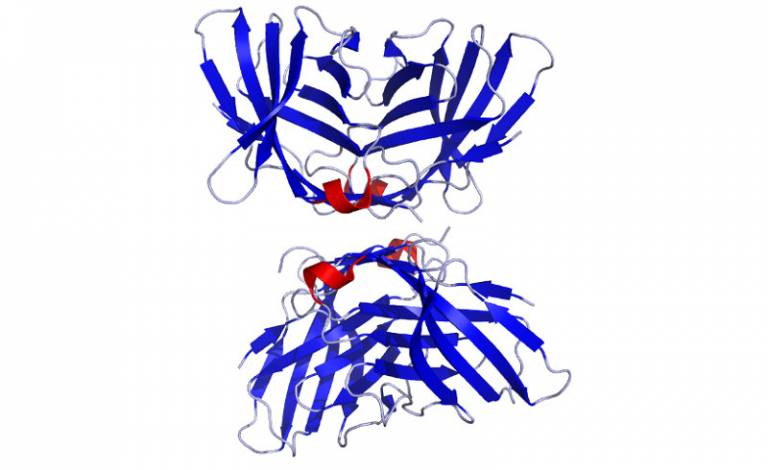 Crystal structure of CTLA4