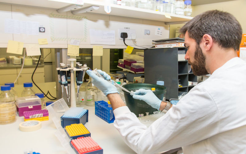 Male researcher using a pipette at a laboratory bench