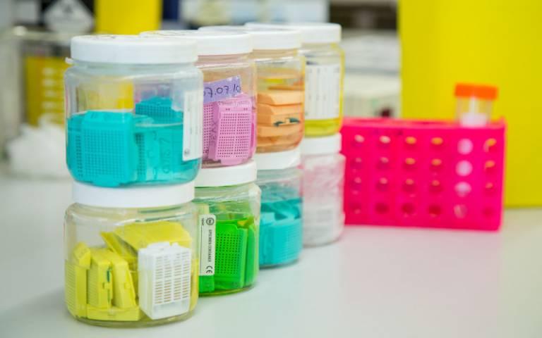 Image shows specimen jars on workbench