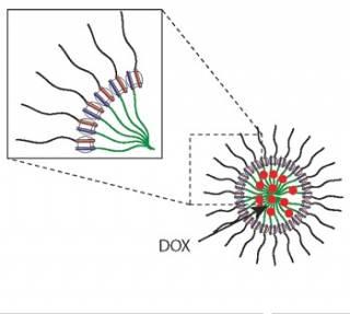 Stimuli-responsive micelle.jpg