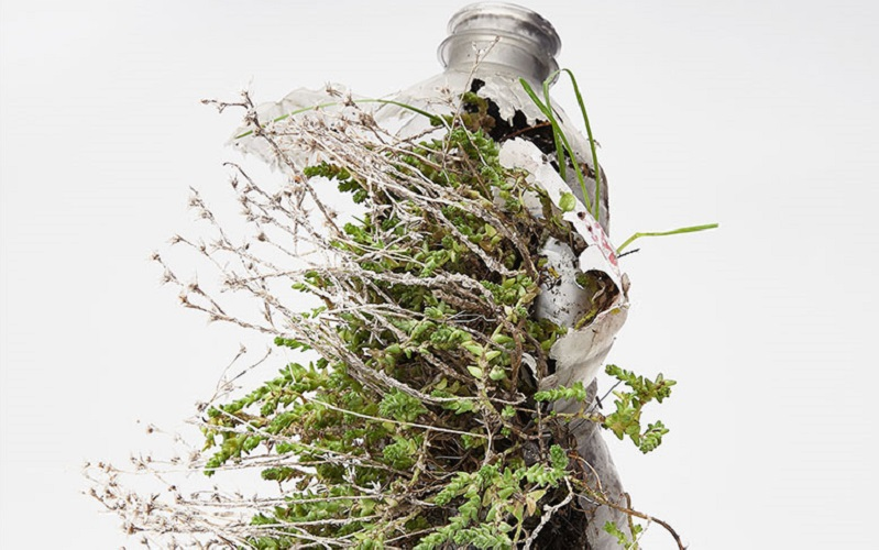 plastic bottle with a plant growing out of it, Diana Lelonek, Center of Living Things