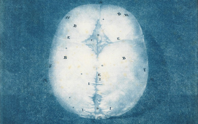 image of brain with letters marked on, language and meaning
