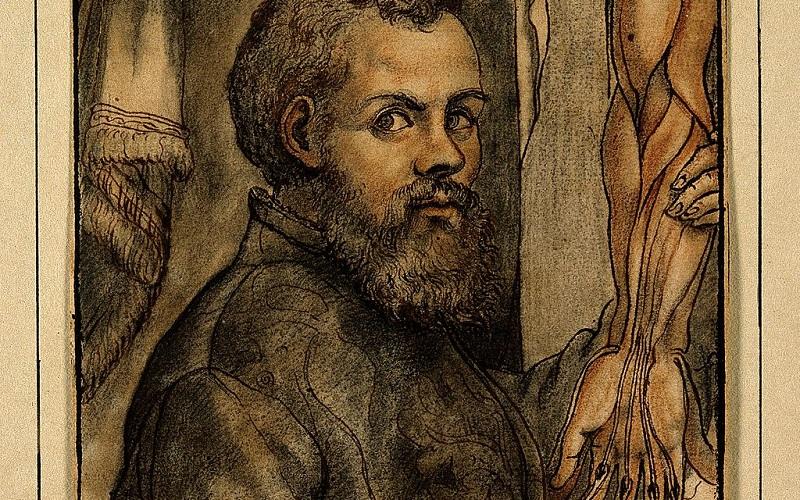 Portrait of Vesalius, img credit Wellcome Trust