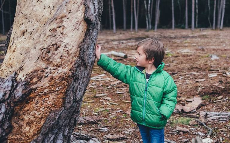 Boy and tree trunk