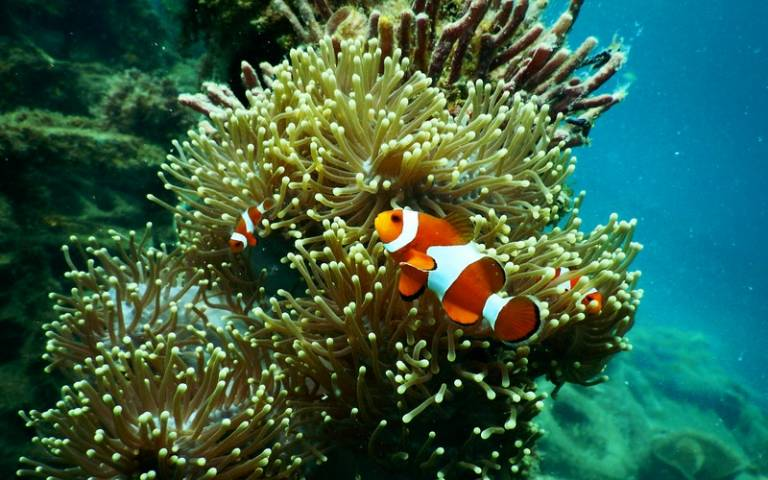 Clownfish near coral reef. Image: Tom Fisk via Pexels