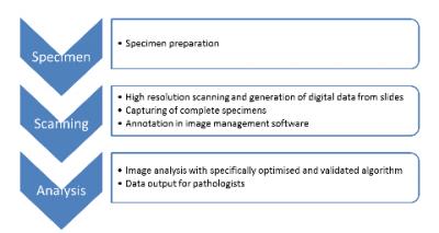 General Workflow Digital Imaging