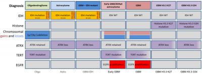 Molecular groups of gliomas