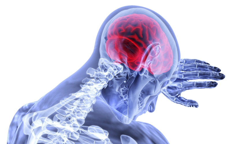 Digital image showing scan of human with skeleton and brain visible
