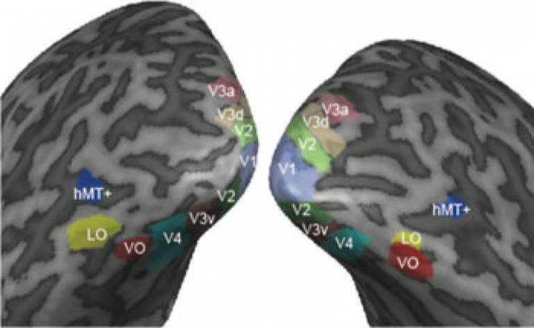 Visual areas on inflated brain…