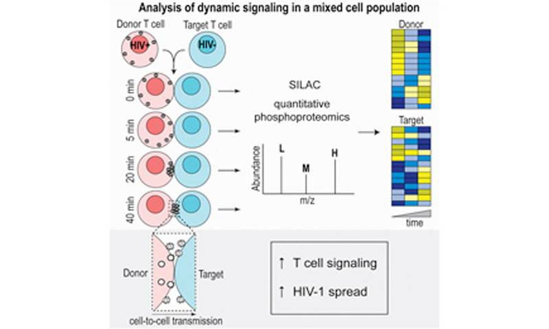 "The Jolly lab has had their paper ""HIV-1 activates T cell signaling independently of antigen to drive viral spread"" published in Cell Reports."