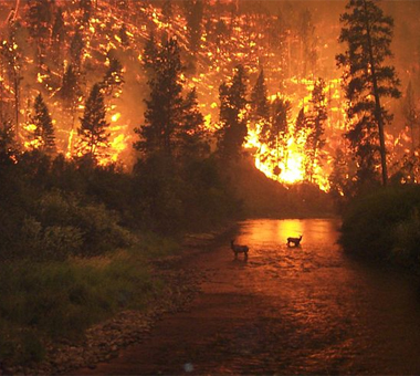 image source: http://commons.wikimedia.org/wiki/File:Deerfire_high_res.jpg