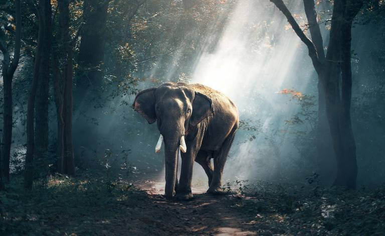 Image of elephant in the woods
