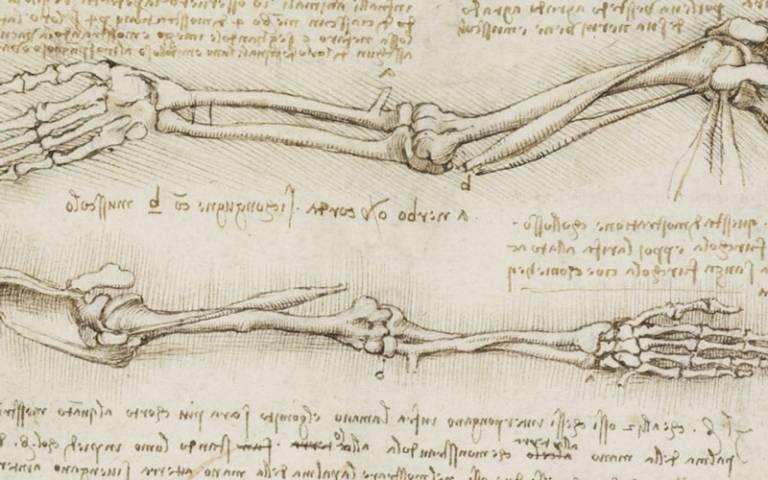 Leonardo Da Vinci anatomical drawing of an arm