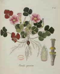 Botanical book, 1794