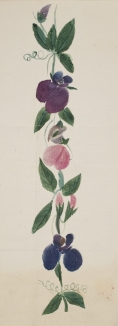 Watercolour of flowers by Francis Galton, aged 8