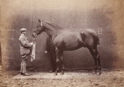 Pedigree horses: Carouse and Oatlands