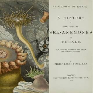 British Sea-anenomes & Corals