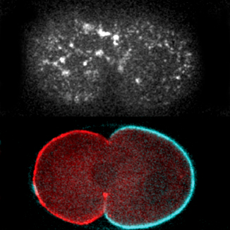 Goerhing lab research image