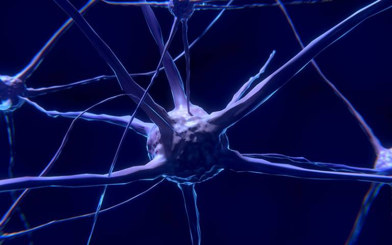 neuron pixabay