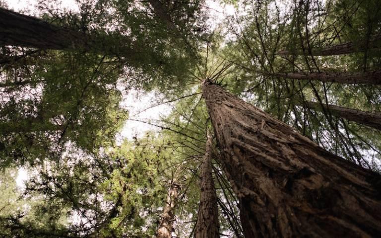 Carbon content in forests