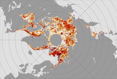 Arctic ice trends