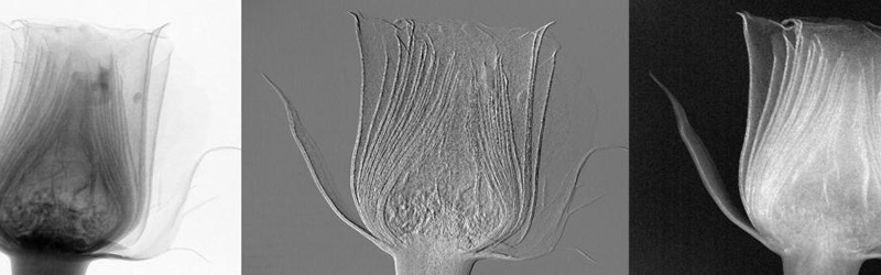 Advanced X-Ray Imaging Group (AXIm)