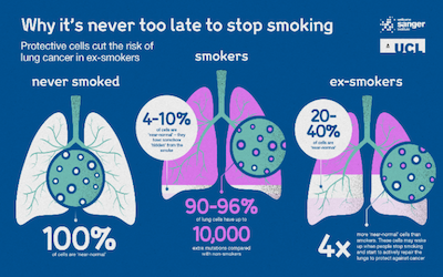 lungs infographic