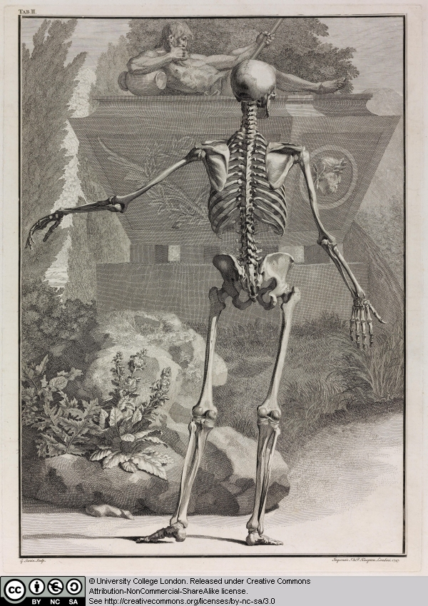 6 Skeleton With Its Left Arm Raised And Facing Left