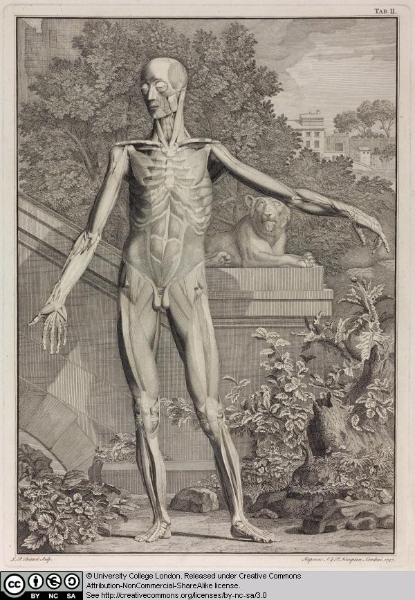7 anatomical study of a skeleton