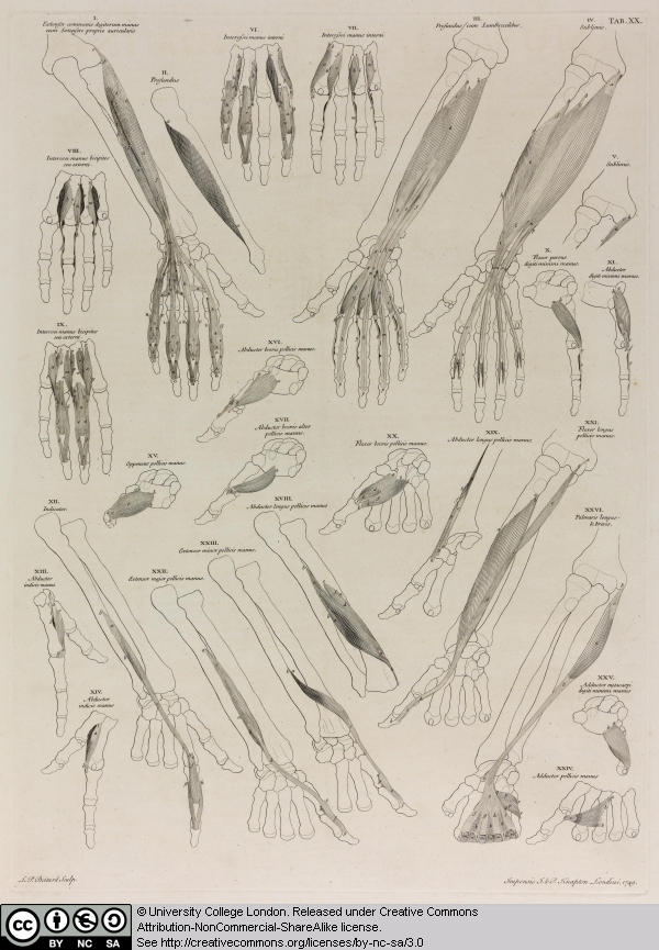 8 Twenty-six Anatomical Studies of the Arm and Hand