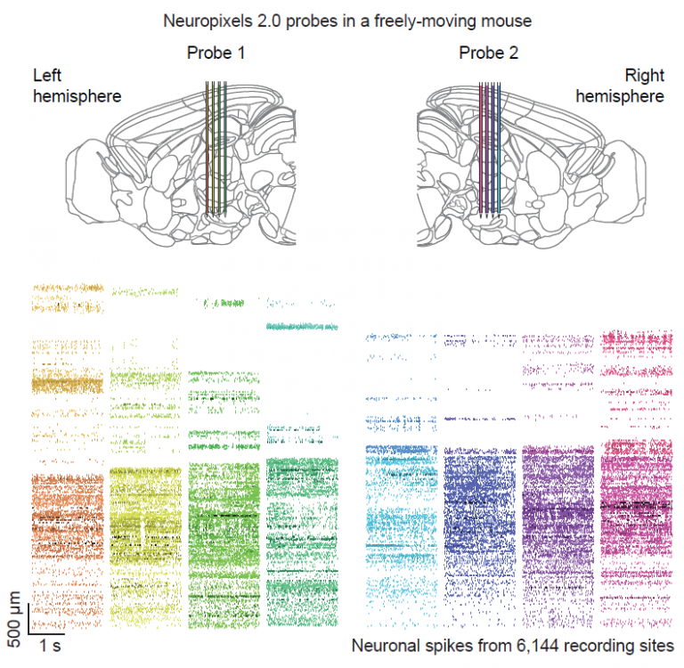 Recordings from six thousand sites in a freely moving mouse