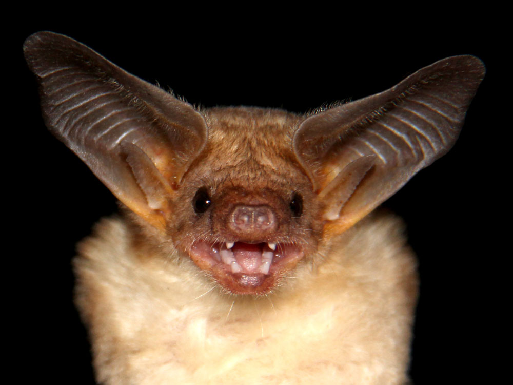 Biggest library of bat sounds compiled | UCL News - UCL - London's