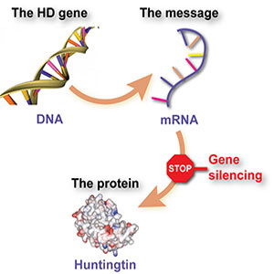 Gene silencing and Huntington's disease
